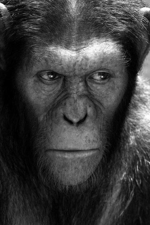 Sneak Week 027: Planet der Affen – Survival | Dunkirk
